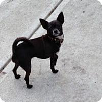 Adopt A Pet :: Louisa- Dayton OH - Dayton, OH