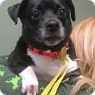 Adopt A Pet :: Suzie Q