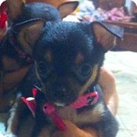 Adopt A Pet :: Oscar - springtown, TX