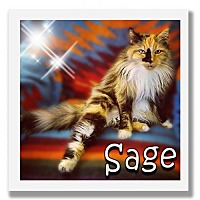 Adopt A Pet :: Sage - Palm Desert, CA