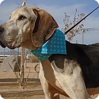 Adopt A Pet :: Father Thyme - Apple Valley, CA