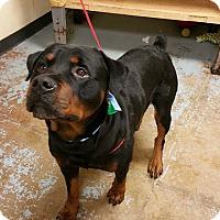 Adopt A Pet :: Leo - Frederick, PA