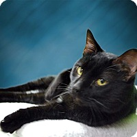 Adopt A Pet :: Percy - New Castle, PA