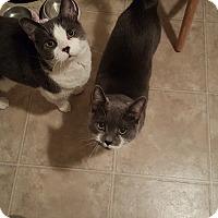 Adopt A Pet :: Lily & Josie - Courtesy Listin - Sparta, NJ