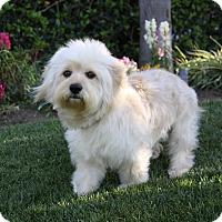 Adopt A Pet :: BERNARD - Newport Beach, CA
