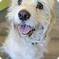 Adopt A Pet :: Walter - Sherman Oaks, CA