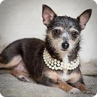 Adopt A Pet :: Savannah - Lafayette, LA