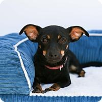 Adopt A Pet :: Princess Elsa - Auburn, CA