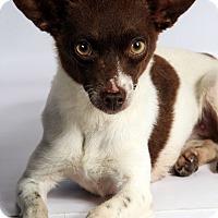 Adopt A Pet :: Paige Chi - St. Louis, MO