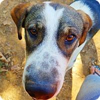 Adopt A Pet :: Todd - Kingston, TN