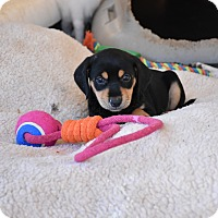 Adopt A Pet :: Coral - Groton, MA