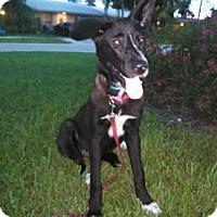 Adopt A Pet :: Nala - Pompano beach, FL