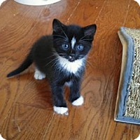 Adopt A Pet :: Paris - Parker Ford, PA