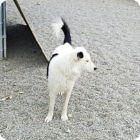 Adopt A Pet :: KODY - Gustine, CA