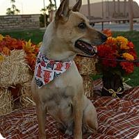 Adopt A Pet :: LT. DAN - Phoenix, AZ
