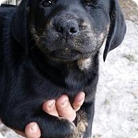 Adopt A Pet :: Otter - Gainesville, FL