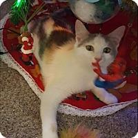 Adopt A Pet :: Loona - Carlisle, PA