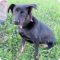 Adopt A Pet :: Temple - Cincinnati, OH