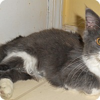 Adopt A Pet :: Octavia - Chattanooga, TN