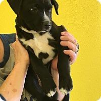 Adopt A Pet :: AIDAN - Albuquerque, NM