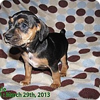 Adopt A Pet :: Julie - Hazard, KY