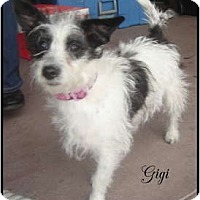 Adopt A Pet :: Gigi - Lake Forest, CA