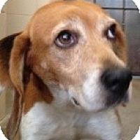 Adopt A Pet :: Diamond - Canoga Park, CA