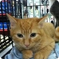 Adopt A Pet :: Jeffery - Riverside, RI