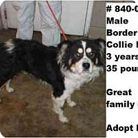 Adopt A Pet :: # 840-09 - RESCUED! - Zanesville, OH