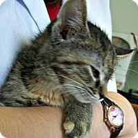 Adopt A Pet :: Sweetie - Toledo, OH