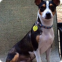 Adopt A Pet :: Brenna - Knoxville, TN