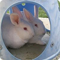 Adopt A Pet :: Zip & Fizz - Bonita, CA
