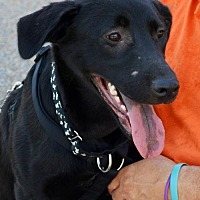 Adopt A Pet :: Bentley - Horn Lake, MS
