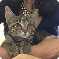 Adopt A Pet :: Nora - McHenry, IL