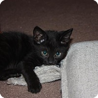 Adopt A Pet :: Sable (LE) - Little Falls, NJ