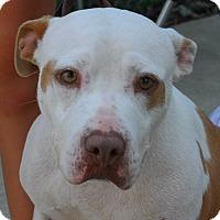Adopt A Pet :: Adara - East Sparta, OH