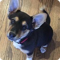 Adopt A Pet :: Marilynn meet me 2/19 - Manchester, CT