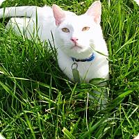 Adopt A Pet :: Sebastian - Monroe, NC
