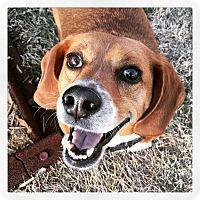 Adopt A Pet :: Chubs - Homewood, AL