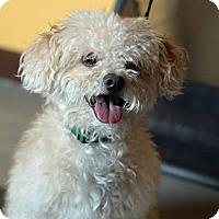 Adopt A Pet :: Dusty - Mount Laurel, NJ