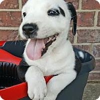 Adopt A Pet :: Abby - San Antonio, TX