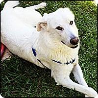 Adopt A Pet :: Prince - Kyle, TX
