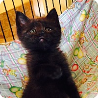 Adopt A Pet :: Fizzy - Encinitas, CA