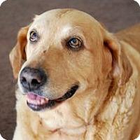 Adopt A Pet :: Dakota Fanning - Minneola, FL
