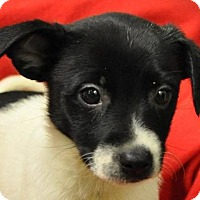 Adopt A Pet :: Dancer - Erwin, TN