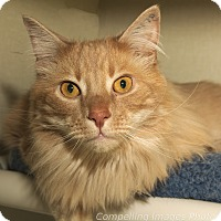Adopt A Pet :: Reginald - Fort Collins, CO