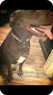 Labrador Retriever Mix Dog for adoption in Killeen, Texas - Sadie