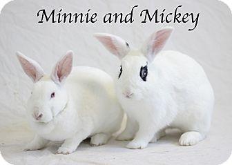 American Mix for adoption in Bradenton, Florida - Minnie