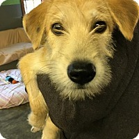 Adopt A Pet :: 'BERGAMOT' - Agoura Hills, CA