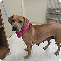 Hound (Unknown Type) Mix Dog for adoption in Laingsburg, Michigan - Sunshine
